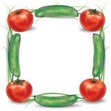 Groene komkommer en rood tomatenkader Stock Foto's