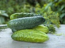 Groene komkommer met dille Royalty-vrije Stock Fotografie