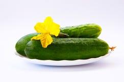 Groene komkommer op wit Royalty-vrije Stock Fotografie