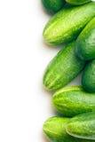 Groene komkommers Royalty-vrije Stock Afbeeldingen