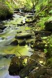 Groene kreek in de lente Stock Foto