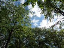 Groene kronen van bomen tegen de hemel en de wolken royalty-vrije stock foto's