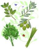Groene kruiden Royalty-vrije Stock Foto