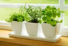 Groene kruiden op een venstervensterbank Stock Foto's