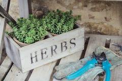 Groene kruidenpot met tuinhulpmiddelen Royalty-vrije Stock Afbeeldingen