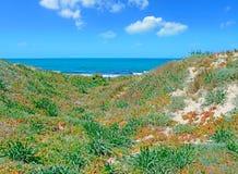 Groene kust stock fotografie