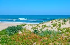 Groene kust en golven royalty-vrije stock fotografie