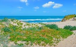 Groene kust en zon stock afbeeldingen