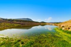 Groene kust in Temo-meer royalty-vrije stock fotografie