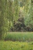 Groene lagen in de lente Royalty-vrije Stock Afbeelding