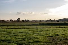 Groene Landbouwgrond royalty-vrije stock afbeeldingen