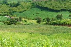 Groene, landbouwinstallatie, enorm gebied stock foto