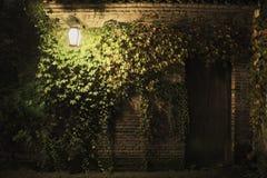 Groene leaveson de muur Stock Foto's