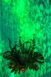 Groene Lichten op Gordijn met Mooi Installatiebelangrijkst voorwerp Stock Fotografie