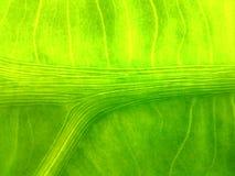 Groene lijn natuurlijke helder Royalty-vrije Stock Afbeelding