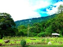Groene meest forrest tuin Stock Foto's
