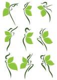 Groene meisjes stock illustratie