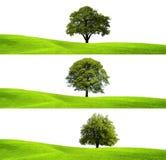 Groene milieu en boom Stock Foto