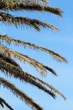 Groene mooie palm Stock Fotografie