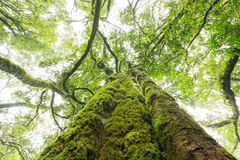 Groene mos behandelde boomboomstam Royalty-vrije Stock Afbeelding