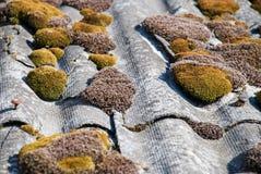 Groene mos en algen op de tegels van het leidak royalty-vrije stock foto