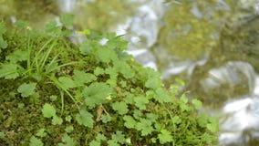 Groene mos en bladeren stock footage