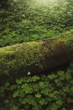 Groene mos en vegetatie op bosvloer royalty-vrije stock foto's