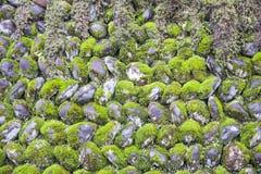 Groene Mosdekking op de Steenmuur, Aardconcept Stock Afbeeldingen