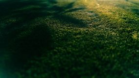 Groene mossen royalty-vrije stock foto