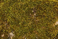 Groene mostextuur als achtergrond in echte aard Stock Foto's
