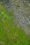 Groene mostextuur en achtergrond in steenaard royalty-vrije stock fotografie