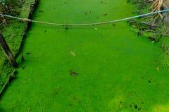 Groene mugvaren in waterkant Royalty-vrije Stock Foto