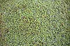 Groene mung boon Royalty-vrije Stock Afbeeldingen
