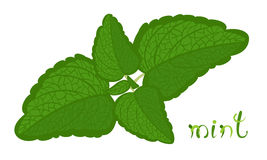 Groene Munt Royalty-vrije Stock Afbeeldingen