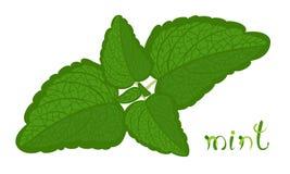 Groene Munt vector illustratie