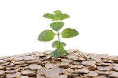 Groene munt geen stapel van muntstukken Stock Foto