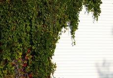 Groene muur Royalty-vrije Stock Foto's