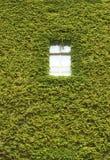 Groene muur Stock Afbeeldingen
