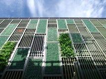 Groene muur Stock Fotografie