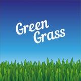 Groene naadloze grasgrenzen Patroonillustratie voor ecoontwerp Aardbehang Stock Foto
