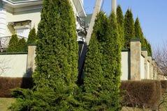 Groene naald sierbomen en struiken dichtbij de muuromheining royalty-vrije stock afbeeldingen