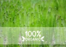 Groene natuurlijke achtergrond Royalty-vrije Stock Afbeeldingen