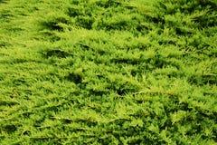 Groene natuurlijke achtergrond Stock Foto's