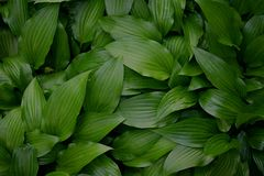Groene Natuurlijke Bladerenachtergrond stock afbeelding