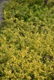 Groene natuurlijke scènes stock foto