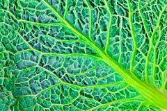 Groene natuurlijke textuur Royalty-vrije Stock Afbeelding
