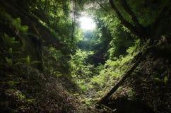 Groene natuurlijke vallei met vegetatie Stock Foto's