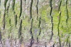 Groene nette schors Royalty-vrije Stock Afbeeldingen