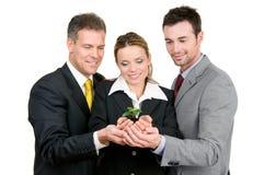 Groene nieuwe groeiende zaken Royalty-vrije Stock Foto's