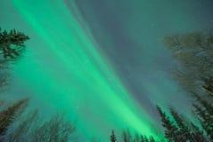 Groene Noordelijke Lichten die zich boven gesilhouetteerde bomen uitbreiden Royalty-vrije Stock Fotografie